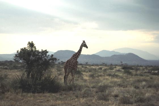 africa-1569707-639x426