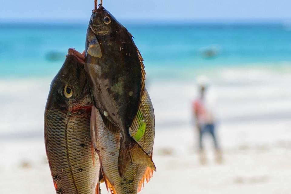 Wyspecjalizowana w przetwórstwie rybnym firma Paula Fish wykorzysta system ERP do poprawy efektywności