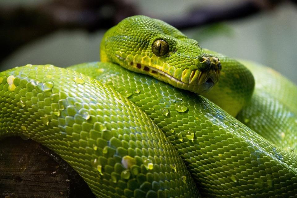 Kim możesz zostać, jeśli znasz Pythona?
