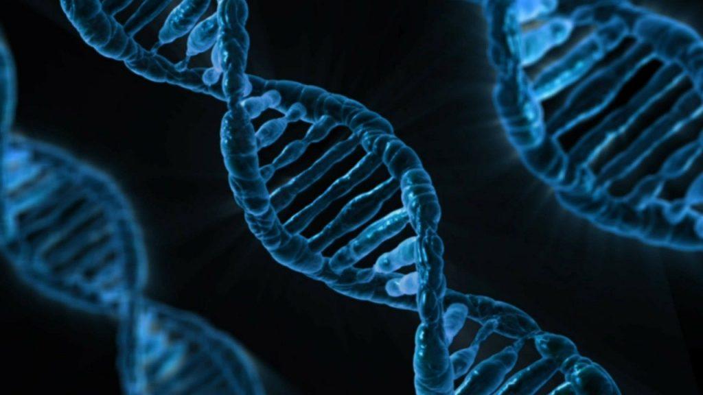"""Praktyczne zastosowanie algorytmów numeryczno-genetycznych do przewidywania przyszłości """"biznesowej"""""""