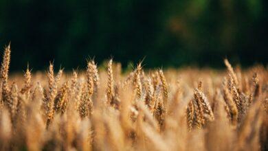Rolnicy coraz chętniej sięgają po onlinowe narzędzia
